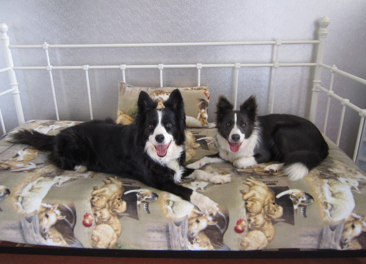 Doggie Daycare & Transport P4