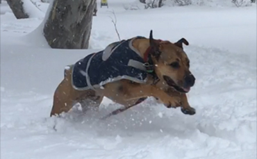 Snow dogs… & dogs at the snow!