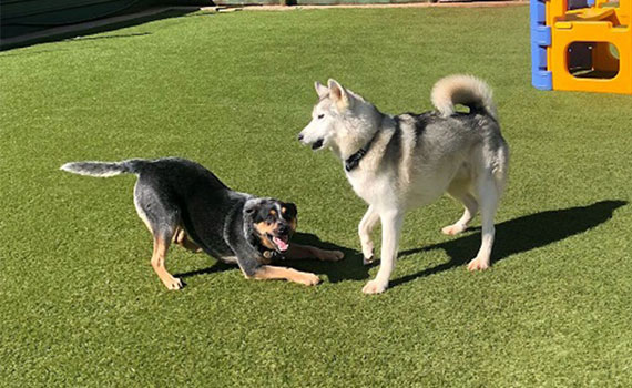 Dog Behaviour Seminar - Smells Like Adventure!