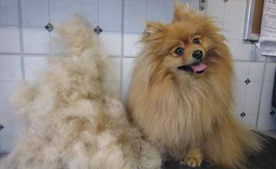 Fluffy Coated Dogs