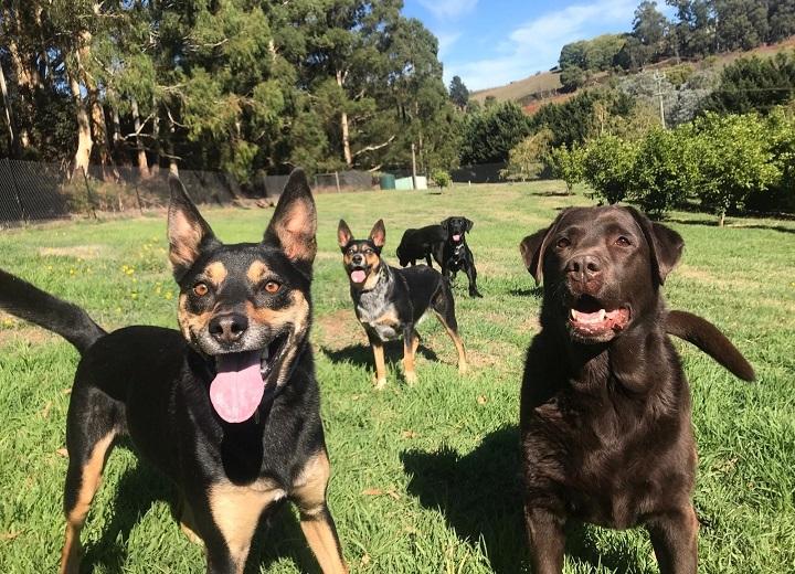 Dog training services at Dogdayz Silvan
