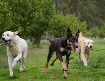 What makes for great Doggie Daycare?